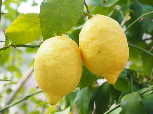 lemon-1117568__480